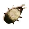 Golden bug brooch